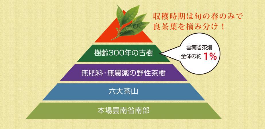 最高級(プーアル茶)木の舟全成分原材料